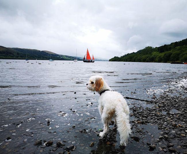 Eryri Bala Lake Llyn Tegid Gwynedd Cymru Wales Snowdonia EyeEm Selects Water Pets Sea Nautical Vessel Beach Dog Swimming Summer Wet Sky