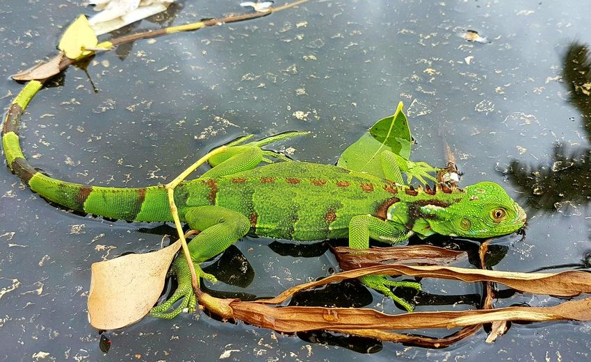 Nature Water Day Animals In The Wild One Animal Green Color Animal Themes Outdoors No People Animal Wildlife Leaf Beauty In Nature Close-up