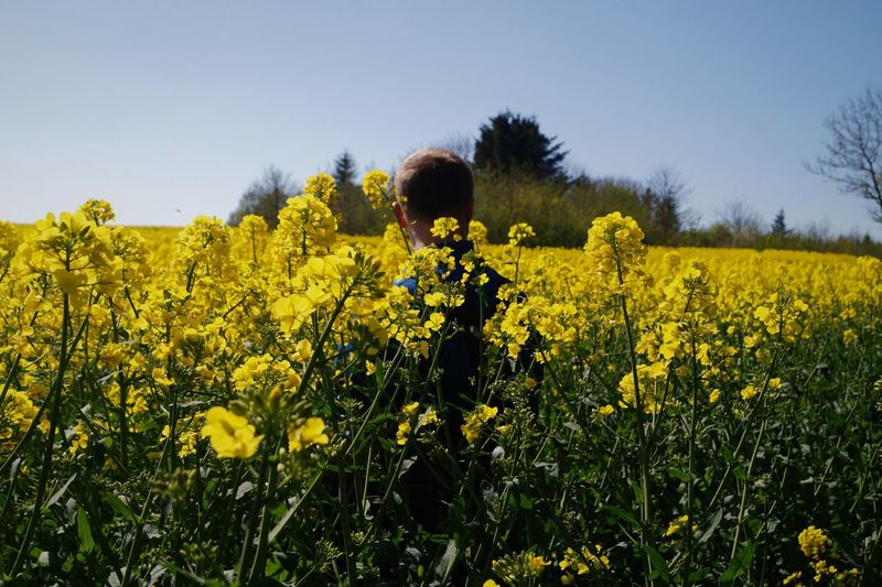 Rear view of man standing in oilseed rape field against sky