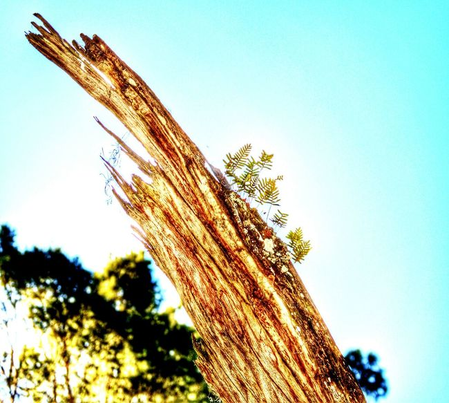 Life after death..... So beautiful. Tree Plants Deadtree Forest Outdoors Nature Taking Photos Life