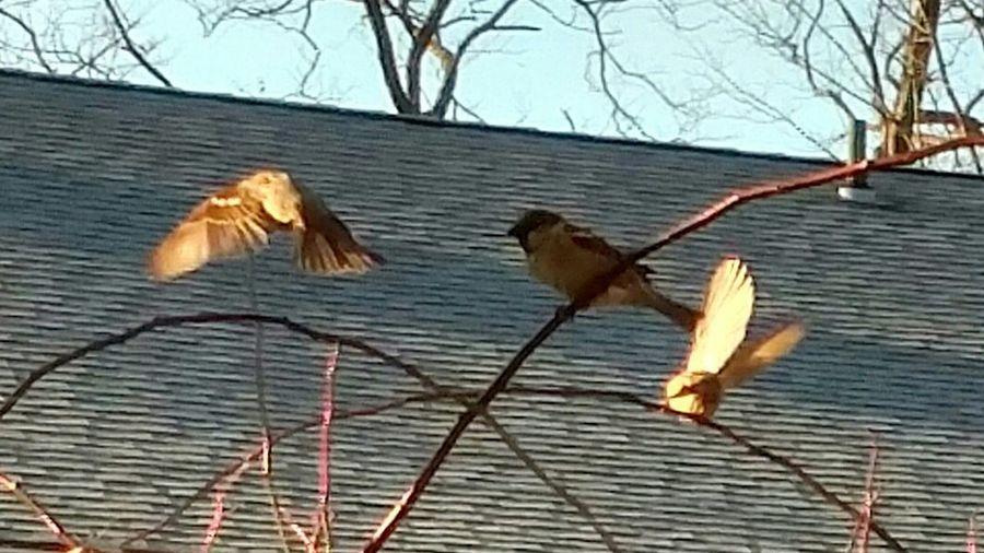 Birds on bare tree