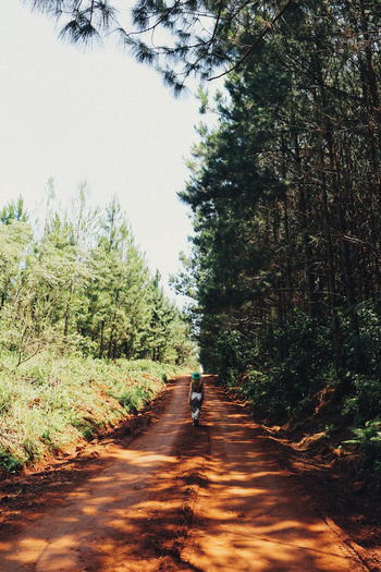 Rear view of person walking on road in forest
