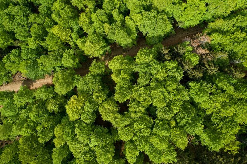 High angle view of plant growing in forest