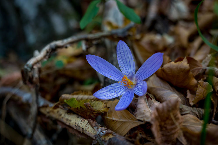 Travel Beauty In Nature Blooming Close-up Day Flower Flower Head Forest Fragility Freshness Growth Leaf Nature No People Outdoors Petal Plant