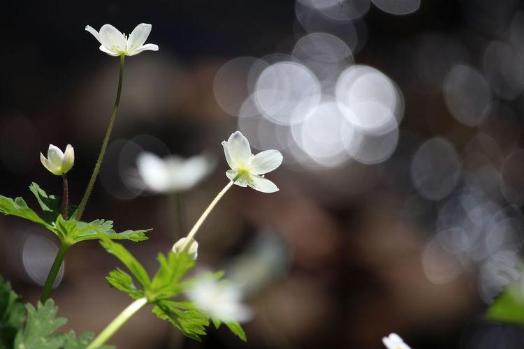 今日の空のイメージで✨✨ Beauty In Nature EyeEm Nature Lover キラキラ 玉ボケ EyeEm Gallery Nature Photography EyeEm Flower EyeEm Best Shots Nature EyeEm おはよう~😆今日もファイト~🙌