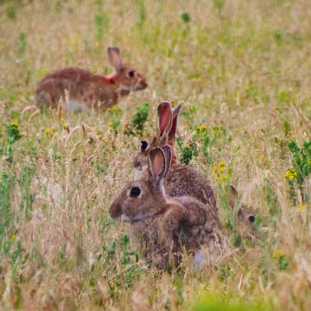 Family rabbits out for an evenings stroll Summer Wildlife The Great Outdoors Love Animals Nature Nature_collection Rabbit Ig_countryside