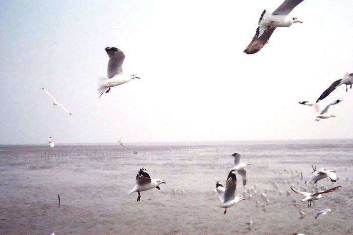Birds Flying Sea And Sky Horizon Over Water Film Photography Outdoor Photography Clear Sky Thailand Bangpu Water Relaxation Freedom