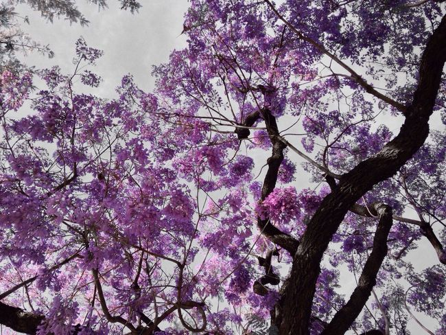 Tree Porn Purple Flower ...so purple