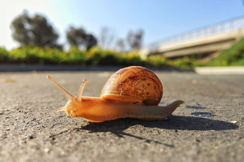 How fast I move before coffee. Check This Out Hello World Sky No People Beauty In Nature Ready-to-eat Outdoors Snail Escargot Garden Creatures Gastropoda Colour Of Life