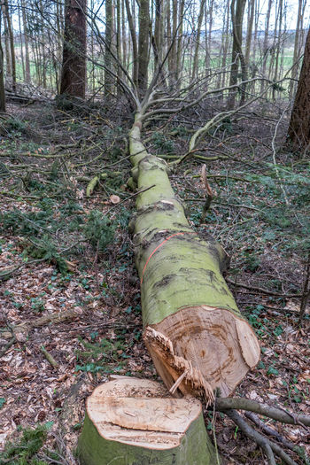 Forest Tree Land Tree Trunk Trunk Plant Nature Tranquility Day Timber WoodLand No People Wood - Material Log Tranquil Scene Field Wood Outdoors Deforestation Non-urban Scene Bark