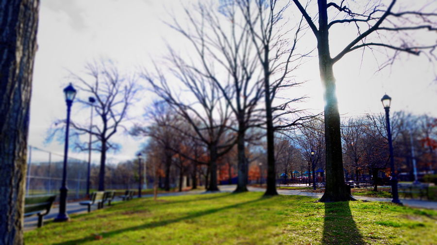 Tree of Light. Naturephotography Streetphotography Tiltshiftphotography Lightandshadow Sunnyday Pattern Trees Grass Lightpole Parkbenches Sony A6000 Project365
