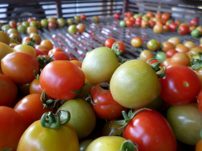 Close-up of tomatoes