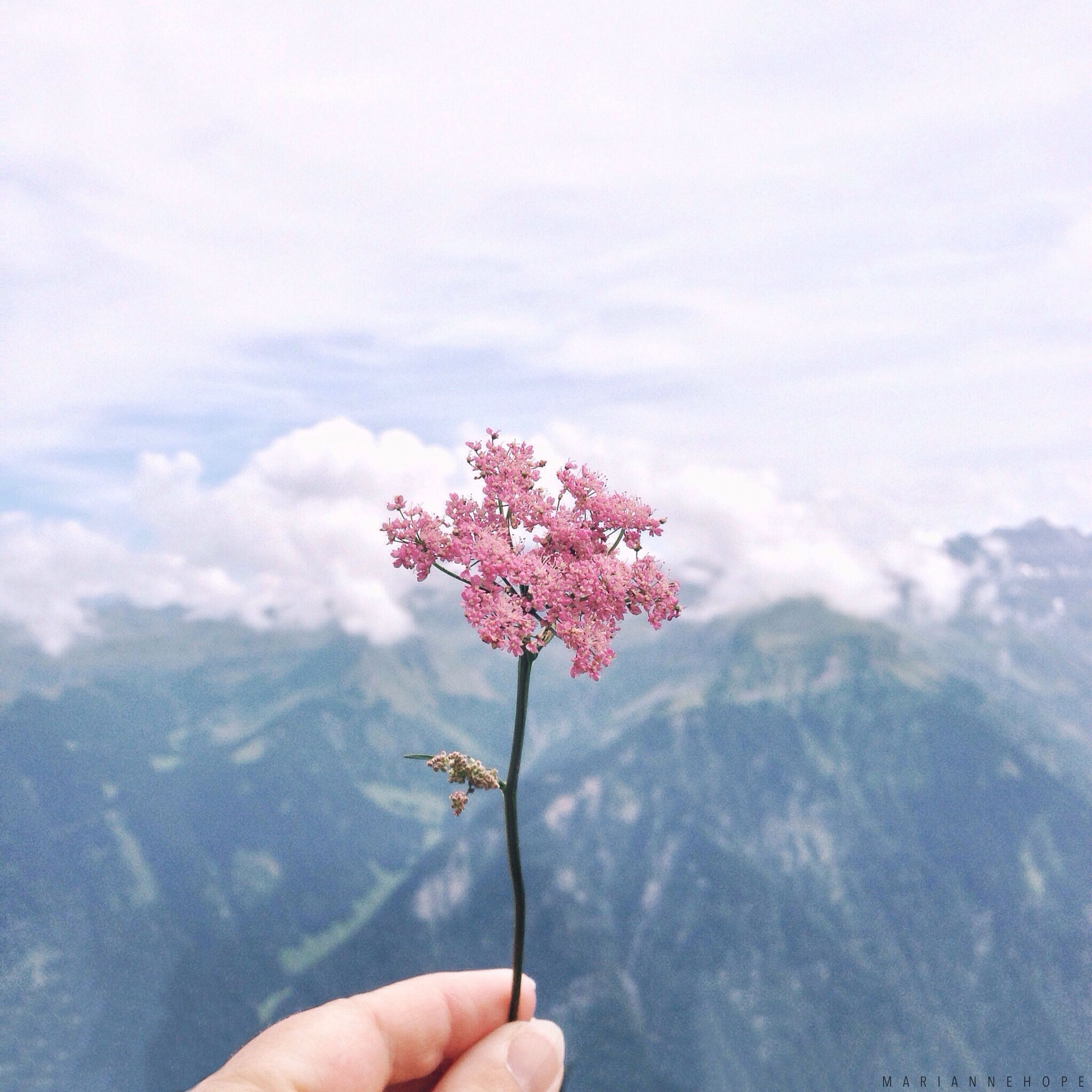 person, holding, part of, cropped, personal perspective, human finger, flower, unrecognizable person, freshness, sky, beauty in nature, nature, fragility, leisure activity, lifestyles, close-up, day