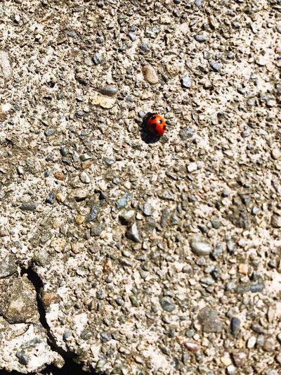 Beetle Day