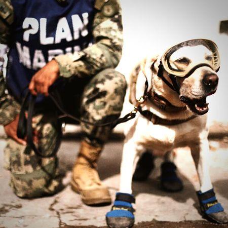 Dog Pets Army Soldier Animal HERO Perros❤ Perrita  Superhero Superdog Mexico City Mexico