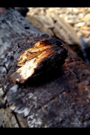 Verbranntes Holzstück Holz Verbrannt Kohle