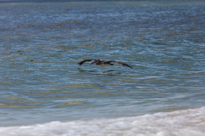 Duck swimming in sea