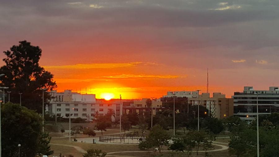 Sunrise in the Brasília City Tree Sunset Cityscape Urban Skyline Multi Colored Sky Architecture Tower Residential District Orange Color
