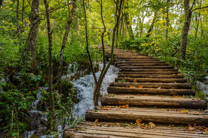 Boardwalk in Plitvice Lake Beauty In Nature Croatia ♡ Day Forest Nature No People Outdoors Plitvice Lakes National Park Plitvice National Park Scenics Steps Steps And Staircases Tranquility Tree
