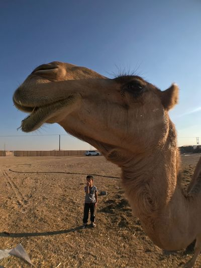 Smile EyeEm Selects Desert Clear Sky One Person One Animal Leisure Activity Sky
