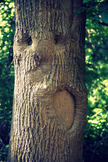 Tree Close-up Tree Trunk Sunlight Nature Textured  Outdoors Growth Day No People Beauty In Nature TreeBeard Tree Faces Tree With Character Tree Trunk Faces Faces Of The World Jackson Bottom Wetlands Nature Tree Oregon Growth