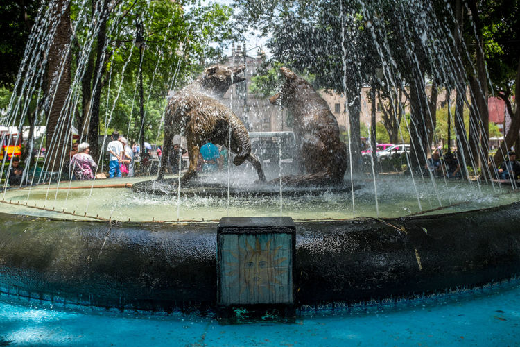 Coyoacan coyotes fountain Agua Animals Architecture Art Art And Craft Attraction Building Exterior Built Structure Cdmx Centro City Coyoacán Coyotes  Fountain Fuente Mexican Mexico Mexico City Mexico DF Motion Park - Man Made Space Sculpture Spraying Tree Water