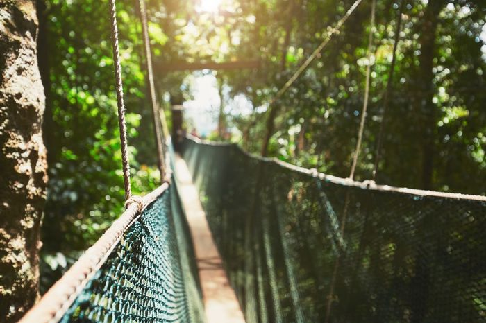 Long elevated walkway through the treetops in rainforest Adventure Beauty In Nature Borneo Bridge - Man Made Structure Canopy Walk Exploring Footbridge Footbridge Footpath Forest Hiking Journey Jungle Malaysia Nature No People Outdoors Rainforest Rope Bridge The Way Forward Tree Tree Canopy  Tree Trunk Treetop Walking