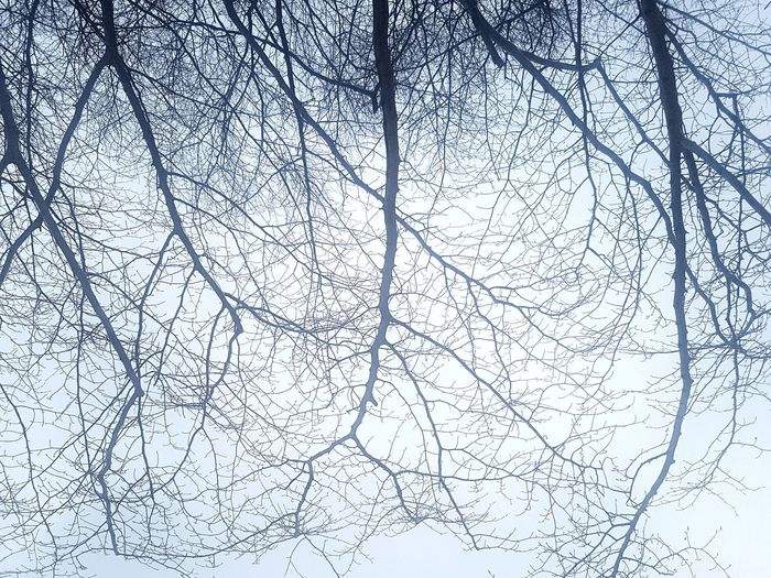 Atmospheric Mood Bare Branches Sky Backgrounds Close-up