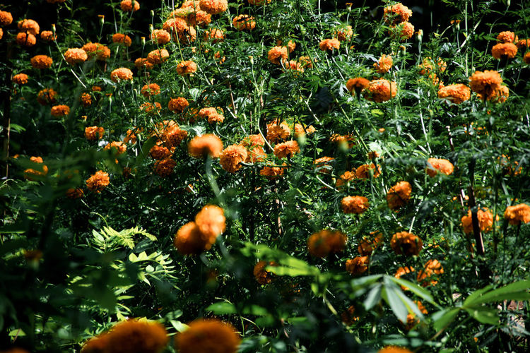 Bali, Indonesia Plant Growth Beauty In Nature Orange Color Freshness No People Selective Focus Nature Flower Day Close-up Fragility Vulnerability  Flowering Plant Field Food Land Green Color Tranquility Full Frame Outdoors Flower Head