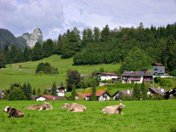 Domestic Animals Field Grass Grazing Green Color Hill Landscape Livestock No People Outdoors Rural Scene Village
