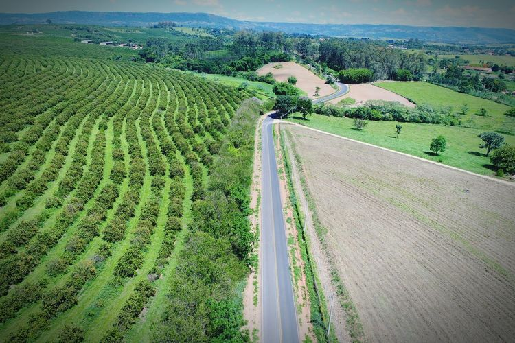 Visão aérea de uma rodovia EyeEm Selects Rural Dronephotography Aerial View Aerial Shot Green Green Color Road Sun Tree Field Farm Life Agriculture Green Color Field Rural Scene High Angle View Crop  Growth Cereal Plant Landscape Beauty In Nature Scenics Nature Outdoors