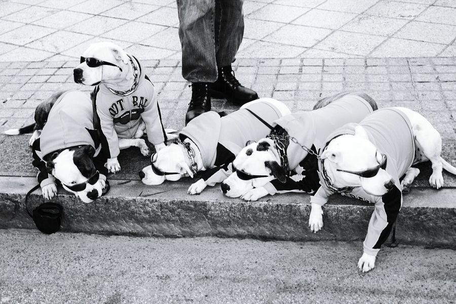 And they said it is a dog eat dog world. LOL Dogs Dogstagram Dogsofinstagram Dogslife Dog Sleeping  DogLove Blackandwhite Blackandwhite Photography Street Photography Dogs ATL