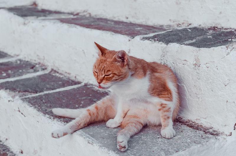 Full length of ginger cat