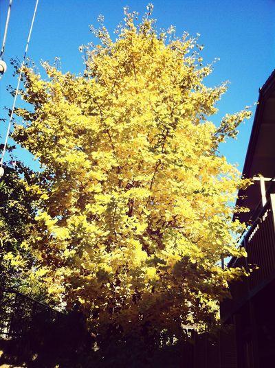 Golden tree Priceless