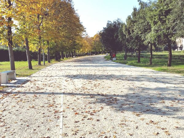 Path Autumn Autumn Colors Autumn Leaves Colors Of Autumn Autumn🍁🍁🍁 Autumn Collection Fallen Leaves Seeing The Sights