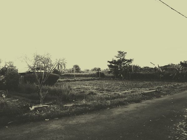 Sky Field Outdoors Agriculture Clear Sky Nature Black And White Vintage Style From  2017 To 1987 No People Day Evening Rice Field Bali Balinese Balinese Life Tree Oil Pump Behind The Temple
