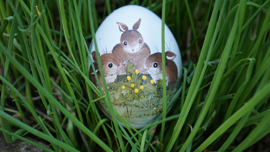 #Bunny #Easter #EasterSunday #NoFilter #rabbit Animal Representation Animal Themes Celebration Easter Grass Green Color Nature No People Outdoors Tradition