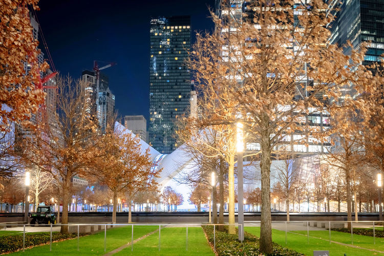 Trees in city at night