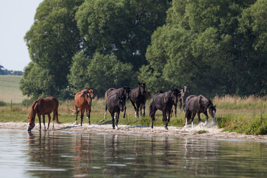 Pferde an der Müritz Horses On A Meadow Animal Photography Animal Themes Animal Wildlife Animals Animals In The Wild Beauty In Nature Horse Horse Life Horse Photography  Horses Horses In A Paddock Nature Pferd Pferdchen Pferde Pferde An Der Müritz Pferdebilder Pferdeliebe Tiere Tiere/Animals Tiere♡ Wildlife Wildlife & Nature Wildlife Photography