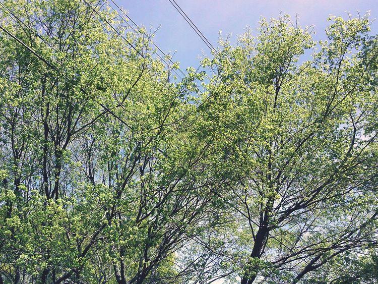 Verdant Light TreePorn Trees