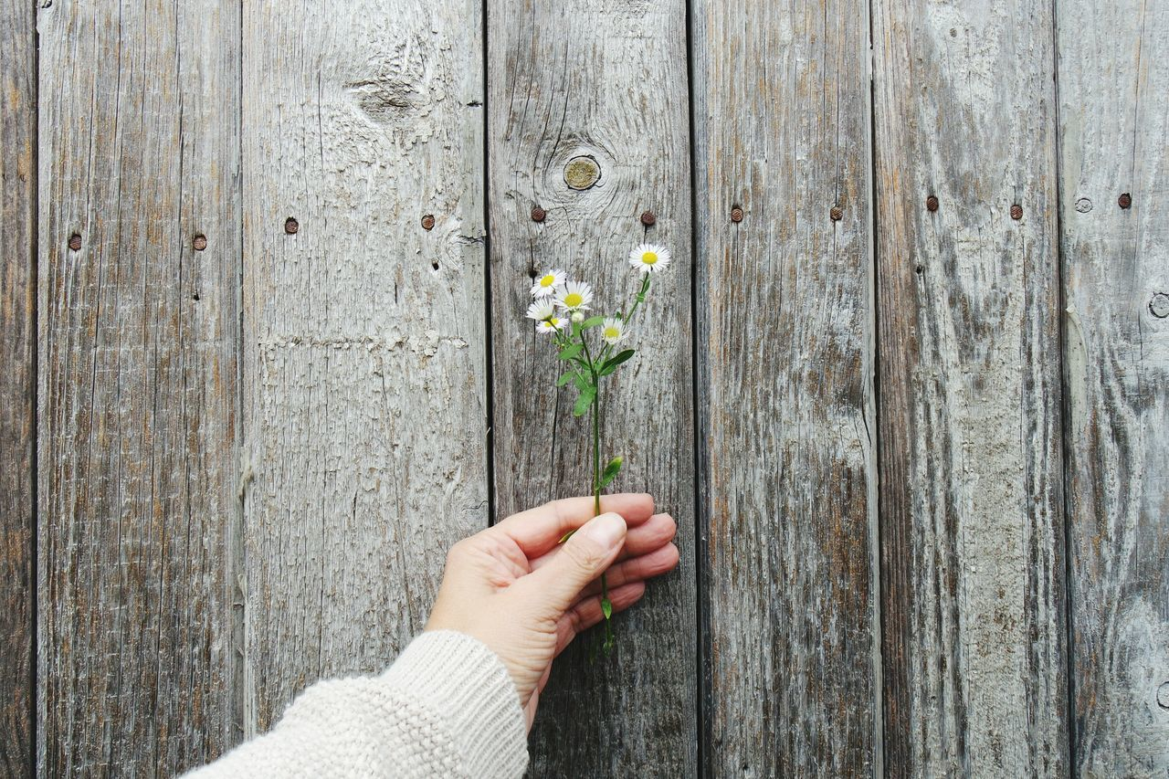 Cropped hand of woman holding flowers against closed wooden door