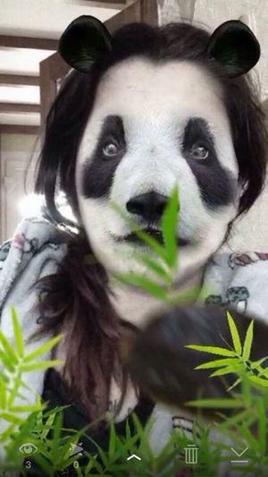 Panda Face  Snapchat Effect Laugh Panda Love