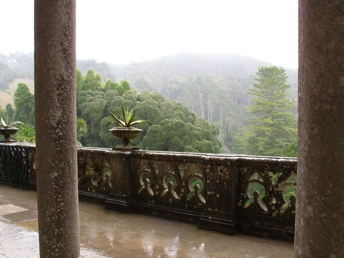 Mist Rainy Days Rain Mist Lush Green Lush Green Mountains Outlook Jungle Check This Out Sintra Showcase April EyeEm Nature Lover Landscape Landscape_Collection Trees