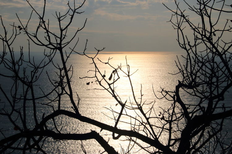 5 Terre Italia 5 Terre Sunset Plant Vacations Mountain Landscape Sea Nature Horizon Over Water Winter Tree Branch Close Up Slow Tourism Perspectives On Nature