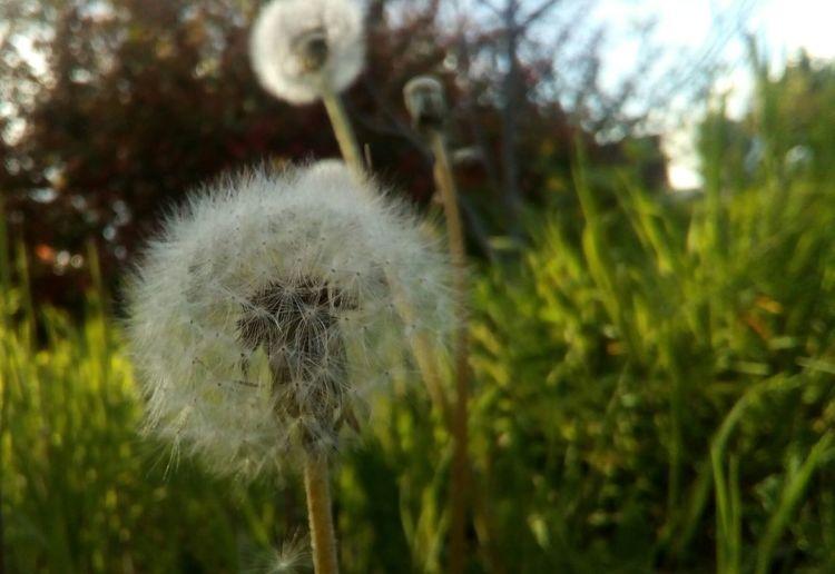 Nature Spring Alonetime