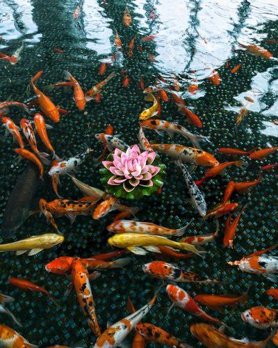 HuaweiP9Photography Huawei P9 Leica HuaweiP9 Huaweip9photos Huawei P9. Huaweiphotography