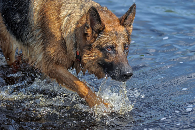 View of dog in water
