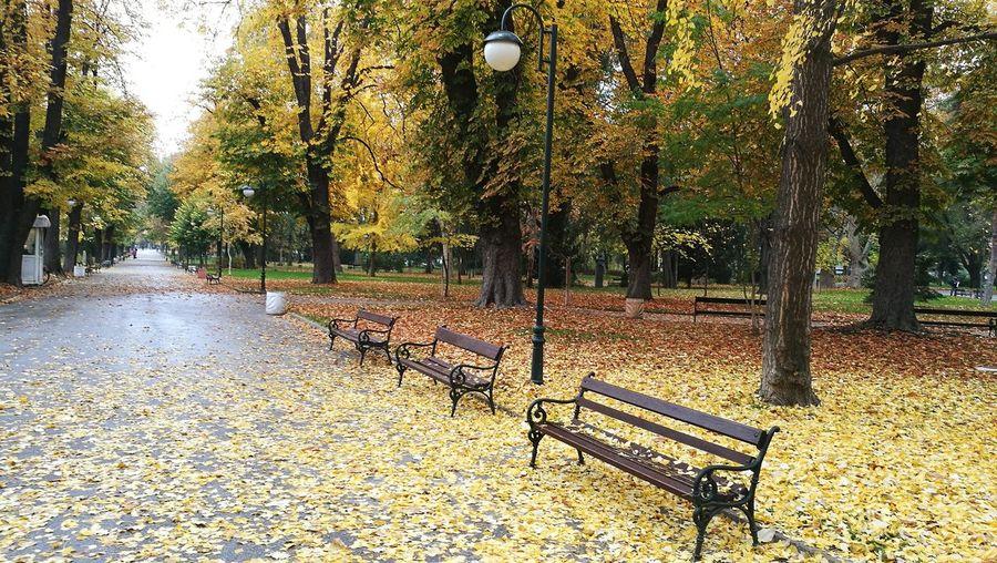 Rainy Days Atthepark Old-park Autumn Autumn Leaves