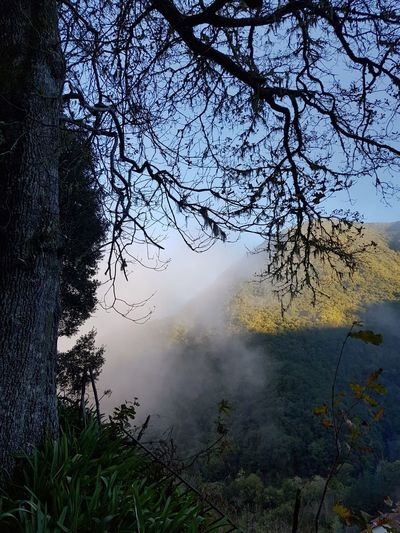 Cloud Laurel Forest Sun Light And Shadow Lichens Moss Landscape Photography Levada Walk Levada Velha Hike Backlight Green Color Blue Color Bildfolge Landscape_Collection Landscape_photography Trees Madeira Island Vacation Time Nature No People Outdoors Beauty In Nature Day Fog Sky