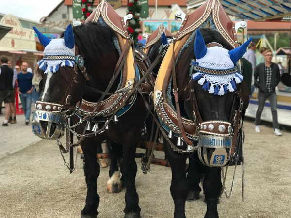 Augustiner Bavaria Beer Horses Tradition Brewery Horses Brewerylife Day Entertainment Outdoors